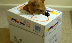 Первая помощь кошке: Что делать в первые минуты после травмы?