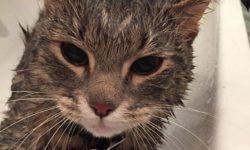 Лучшие шампуни для кошек: виды, цены, отзывы- Муркотэ