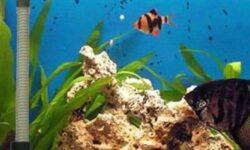 Нагреватель для аквариума (обогреватель с терморегулятором): как правильно выбрать, установить, какой лучше, сделать своими руками