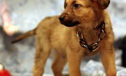 Клички для собак дворняжек мальчиков и девочек: как назвать щенка русским и красивым именем? Как назвать породистого питомца по родословной?