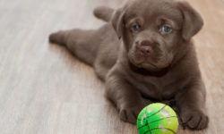 Глисты или гельминты у собаки: симптомы и лечение в домашних условиях