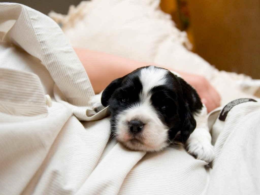 8 видов вакцины нобивак для собак: инструкция по применению, описание
