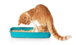 7 причин, почему кот часто ходит по маленькому в туалет