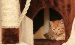Как приучить кошку к домику - способы приучение