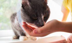 Омепразол для кошек - дозировка и лечение заболеваний