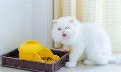 Автоматическая кормушка для кошек своими руками: как сделать автокормушку для кота самому?