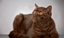 7 причин повышенной температуры тела у кошек