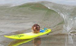 Умеют ли крысы плавать (дикие и домашние)?