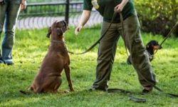 Как научить собаку командам «фас», «сидеть», «рядом»: методы и основы дрессировки