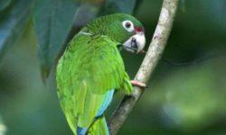 Почему попугай скрипит клювом: подробное описание причин