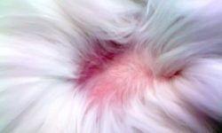 Облысение у кошек: симптомы, причины, лечение и профилактика