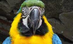 Овощи для попугаев | Какие овощи можно давать пернатым