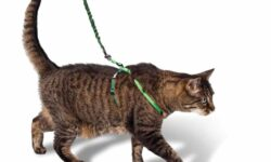 Шлейка для кошки своими руками, выкройка и фото: как сделать кошачий поводок в домашних условиях?