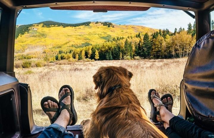 Путешествие с собакой на автомобиле