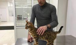 """Круглосуточная ветеринарная клиника """"Кот-Бегемот"""""""