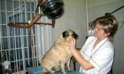 Сеть ветеринарных клиник доктора Герстендорфа