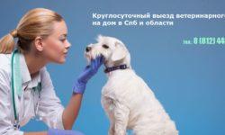 """Ветцентр """"Ветеринарный Петербург"""""""