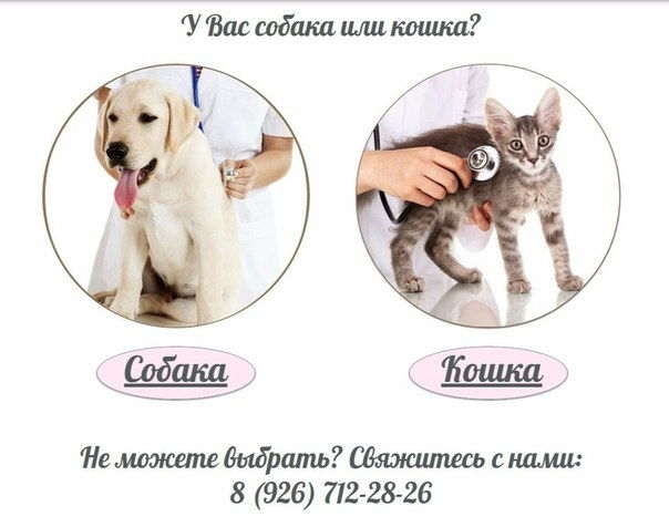 """Ветеринарная клиника """"Bonita"""""""