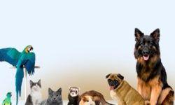 """Ветеринарная клиника """"Skyvet"""" в Москве"""