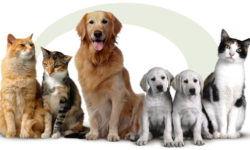 """Ветеринарная клиника """"Ветеринарная помощь"""""""