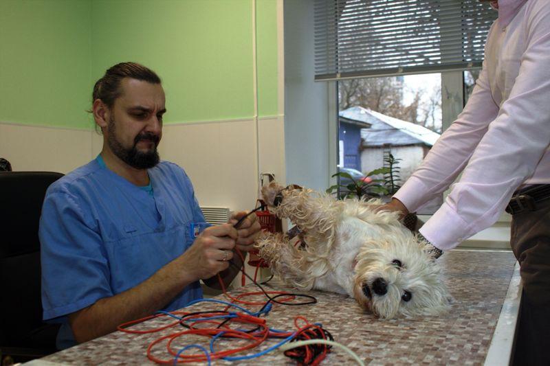 """Ветеринарная клиника """"ВетФолль"""""""