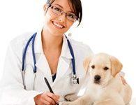 """Ветеринарный кабинет """"Доктора Лиса"""""""