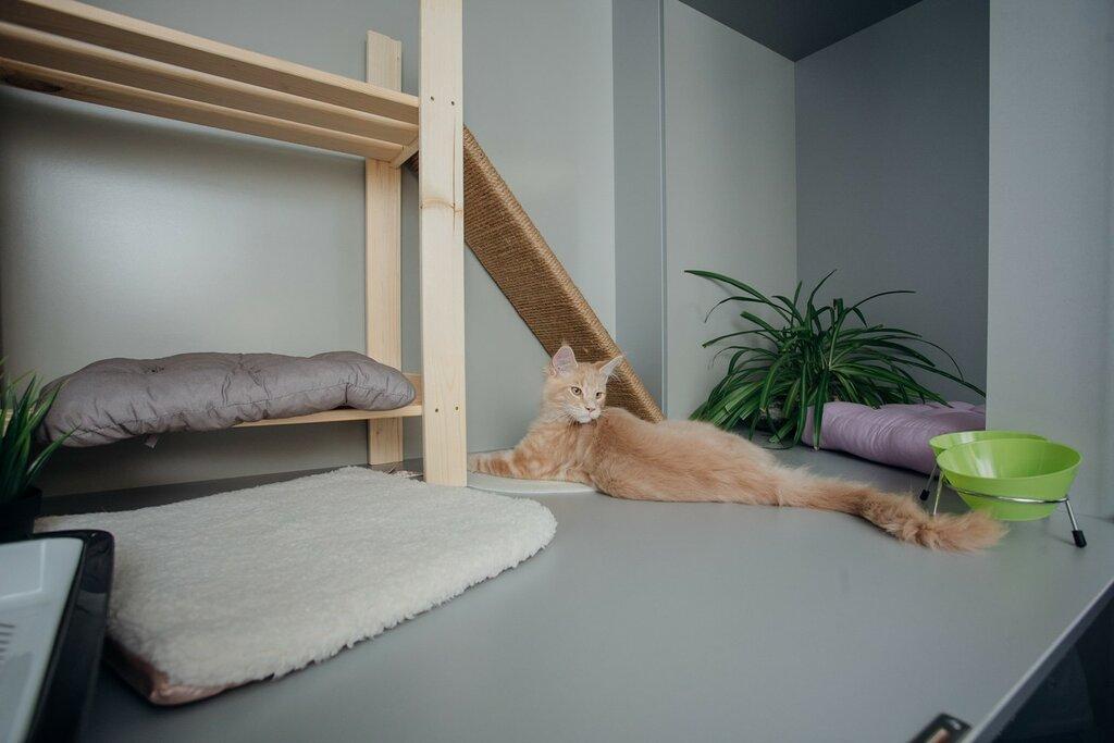 Отель для ваших любимых котиков